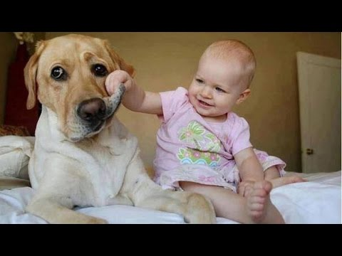 Funny babies annoying dogs – Cute dog & baby compilation