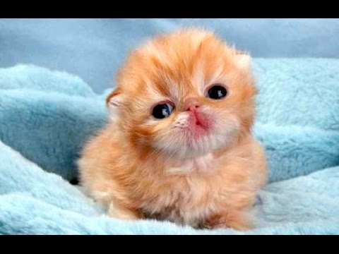 Funny Cute Baby Animal Videos Compilation 2014 [NEW]