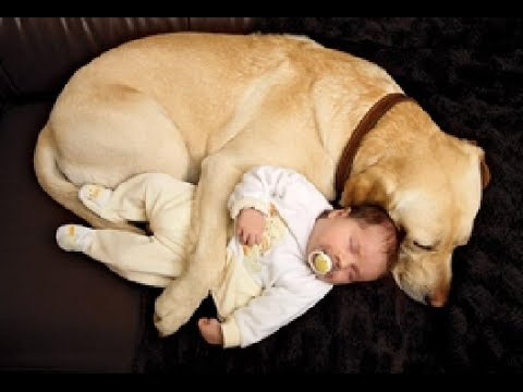 Best Of Funny Cats And Dogs Protecting Babies Compilation 2014 [NEW]